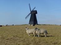 Beacon Hill Windmill - Ann Perrin copyright 2012