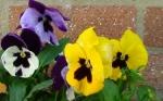 Flower 6 copyright Ann Perrin 2012
