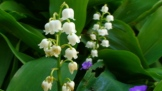 Flowers 5 copyright Ann Perrin 2012