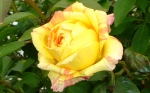 Lovely shade of sunny yellow copyright Ann Perrin 2012