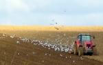 farmers field 1