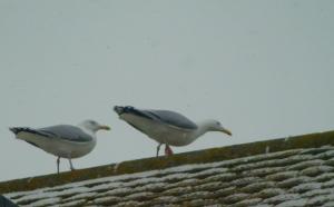Passing seagulls