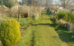 the allotment last week - ours is in front of the shed on the left