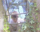 joshie in tree