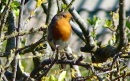 Brilliant robin waiting to feed young - if you want to use this pic please give me a credit